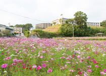 慈遊館の目前に広がる花畑
